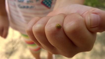 Marienkäfer krabbelt über eine Kinderhand