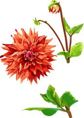 set of georgina flower and leaves 1