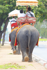tourist riding on elephant back walking on side road to watching