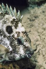 Egypt, Red Sea. Hurghada, small tropical fish