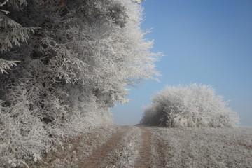 Waldrand, Büsche und Feldweg im Rauhreif