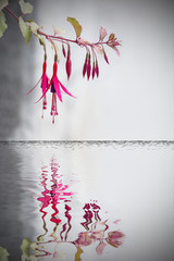 flower reflected on water