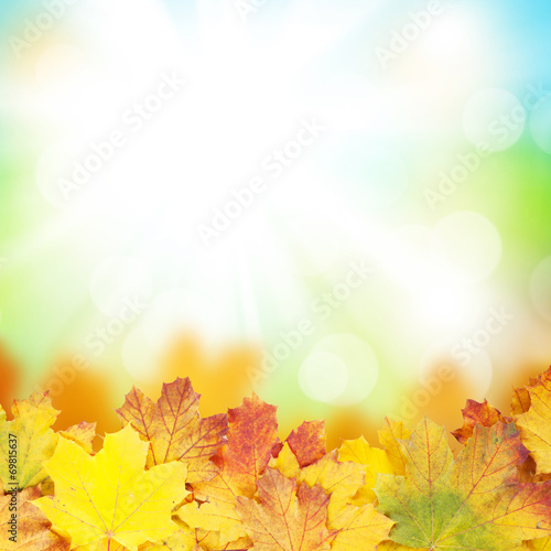 canvas print picture Autumn background with maple leaves