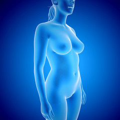 Female Body - x-ray view
