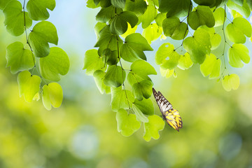 Butterfly with green leaf