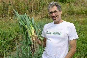 Organic farmer harvesting green onion