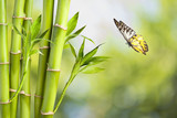 Butterfly with Bamboo