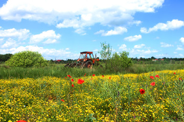 Red tractor on a poppy field