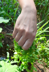 female hand with weeds