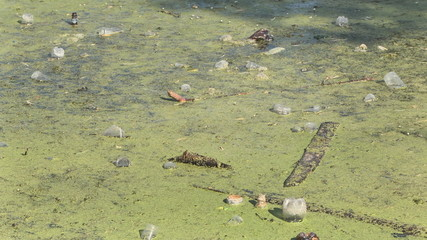 Lake waste debris dirty bottles glass, Pocket, plastic