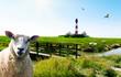 Westerhever in Nordfriesland
