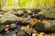 Leinwanddruck Bild - Moss Rocks And Fall Leaves