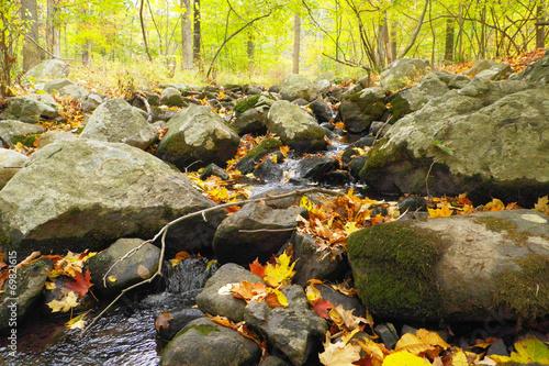 Leinwanddruck Bild Moss Rocks And Fall Leaves