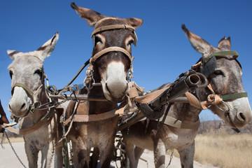 Tre muli