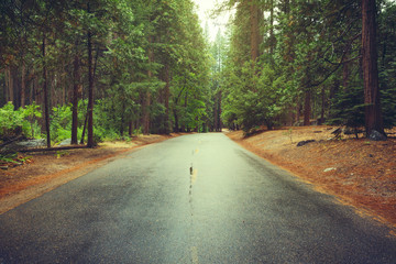 Road after the rain in the woods. Yosemite National Park, CA