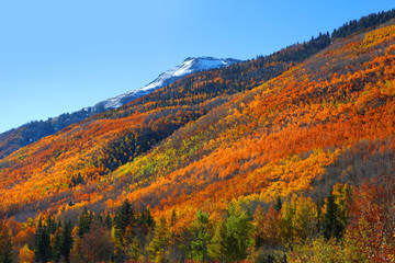 Fall foliage in San Juan mountains