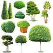 canvas print picture - Collage of green trees and bushes isolated on white