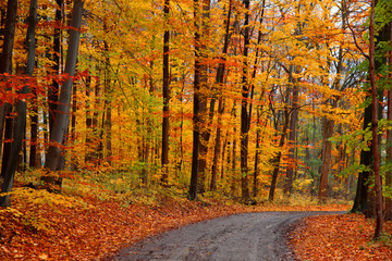 Dirt road through autumn trees