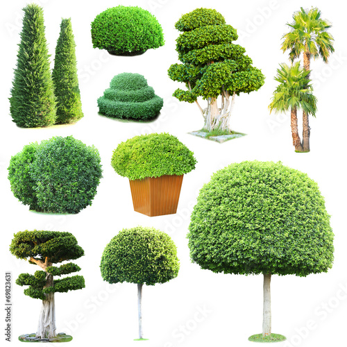 canvas print picture Collage of green trees and bushes isolated on white