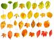 verschiedene bunte Herbstblätter, farblich sortiert