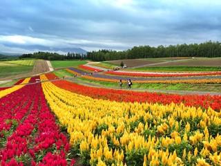 Furano in Hokkaido
