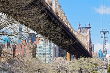 Manhattan buildings and Queensboro Bridge during cherry blossom.