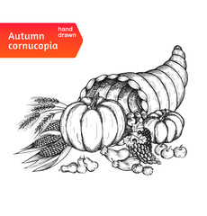 Cornucopia. Horn of plenty with autumn harvest symbols