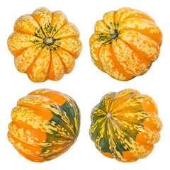 Decorative squash fruits isolated on white