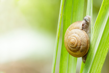 Closeup snail on green leaf.
