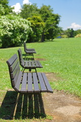 Row of brown wood bench at green park