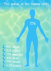 the water in the human body
