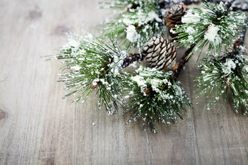 Christmas pine tree branch