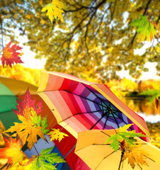 Herbsttag mit Regenschirmen :)