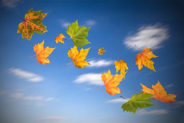 fliegend hebstblätter im himmel
