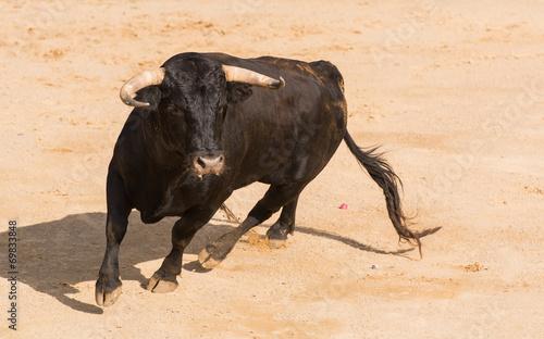 In de dag Stierenvechten Toro Bravo Español