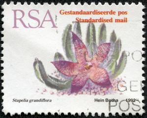 stamp shows a flower Stapelia grandiflora