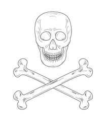 sketch of the skull and bones