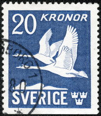 stamp printed in the Sweden shows Flying Swans