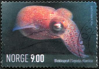 stamp printed in Norway shows a sepiola atlantica