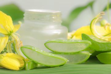 Aloe vera plant for skincare