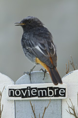 ird perched on a fence with the word November on spanish