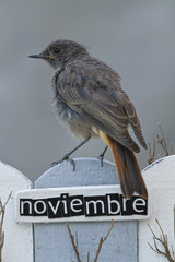 Bird perched on a fence with the word November on spanish