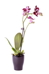 Closeup photo of orchid isolated on white