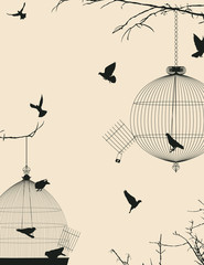 Birds and birdcages postcard