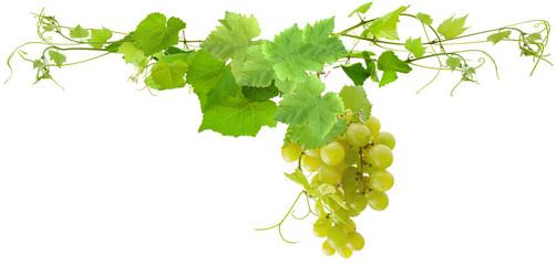 grappe de raisin blanc et feuilles de vigne