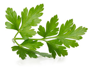 parsley leaves isolated on the white background