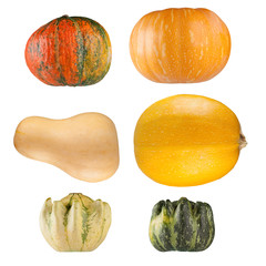 Collection of pumpkins on white background