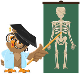 Owl teacher. Anatomy Lesson, the study of the human skeleton
