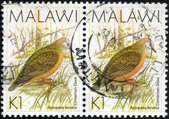 stamp printed in Malawi shows the cinnamon dove