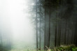 Fog in the forestof Paneveggio, Trentino - Dolomites